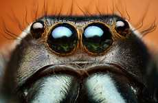 Thomas Shahan Captures Closeups of Colorful Insects
