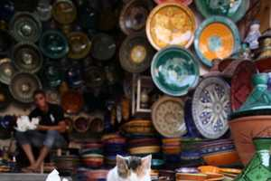 'Street Cats of Morocco 2010' by Clare-Frances Cassells Sees Sad Felines
