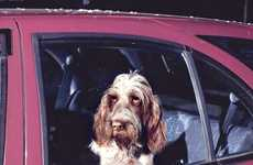 Forlorn Pet Photography - Photographer Martin Usborne 'The Silence of Dogs in Cars' Seri