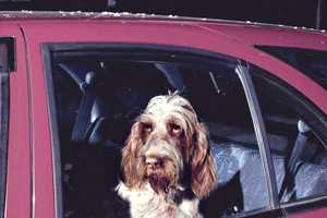 Photographer Martin Usborne 'The Silence of Dogs in Cars' Seri
