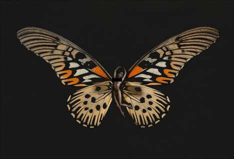 Butterfly-Winged Beauties - The Carsten Witte 'Psyche' Series Examines Fairytale Specimens