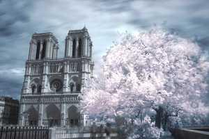Olivier Dolbeau Captures Paris' Allure