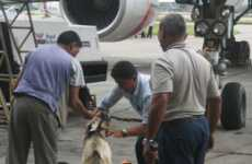 Bizarre Travel Rituals - Airline Sacrifices Goats