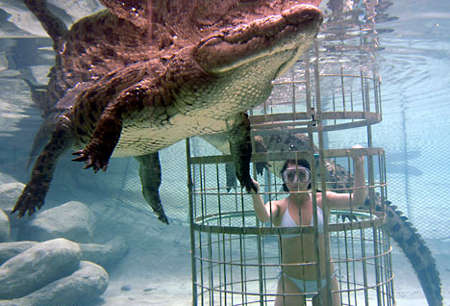 Extreme Tourism Part II - Diving With Crocodiles