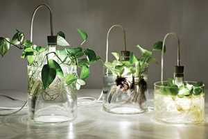 The Vase & Leuchte by Miriam Aust Acts as a Planter and Lamp
