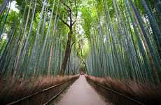 Bamboo Forest Photography - The Navid Baraty 'Japan' Series is All About People and Places