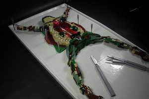 Lego Frog Dissection by Dave Kaleta Reminds You of High School Classes
