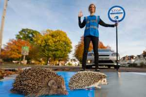 Sega's Sonic the Hedgehog Helps Britain's Endangered Hedgehogs