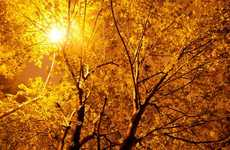 Illuminated Timber