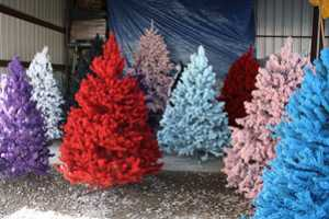 non traditional colored Christmas trees
