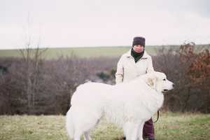 These Photos of Dog Walkers by Dave Imms Are Refreshingly Simple