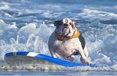 Surfing Canine Calenders