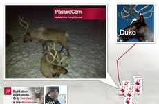 Live-Streamed Animal Campaigns