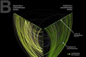 Martin Krzywinski's Linear Hive Plots Simplify Complex Visualization