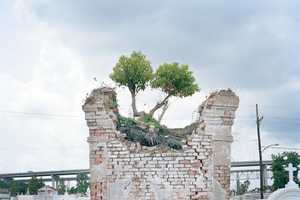 Colleen Mullins Captures New Orleans' Green Disasters