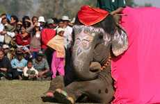 Elephant Beauty Contests