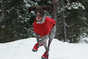 Bark'n Boots Keeps Your Dog's Paws Toasty Warm in the Chilly Winter Weather