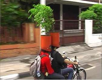 Potted Plant Helmets