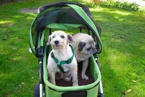 The Dogger is the World's Coolest Dog Stroller