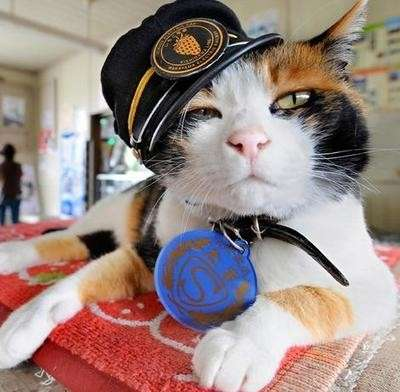 $10.6 Million Uniformed Cats