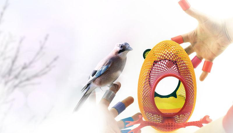 3D-Printed Bird Feeders