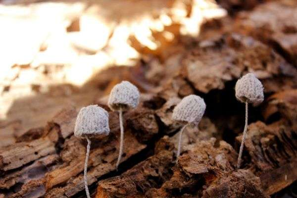 Realistic Knitted Mushrooms