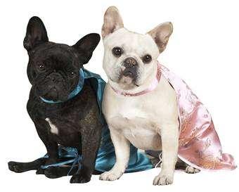 Dog Blogs for Celebrity Canines