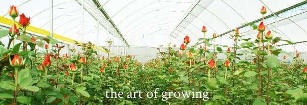 Vegetable Export Enterprises