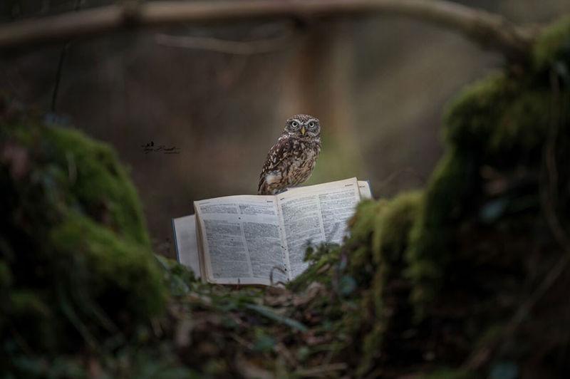 Adventurous Owl Photography