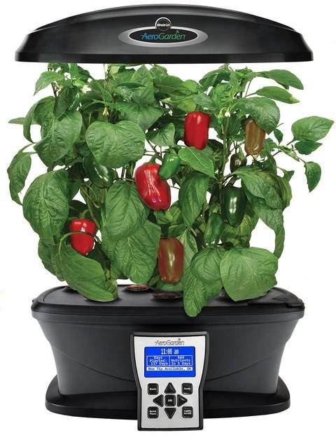 Indoor Vegetable Aerogardens aerogarden