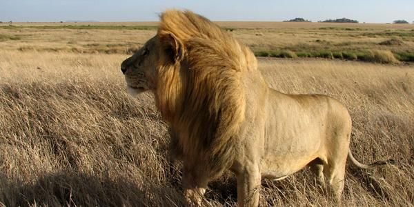 Extensive African Tours