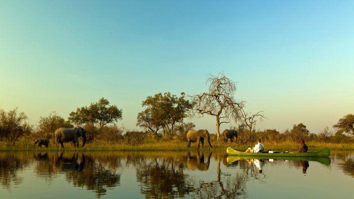 Tech-Free African Safari Tours