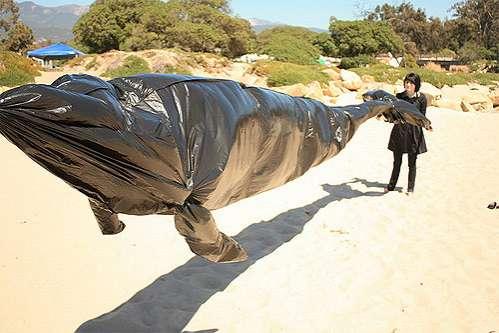 DIY Mammal Floats