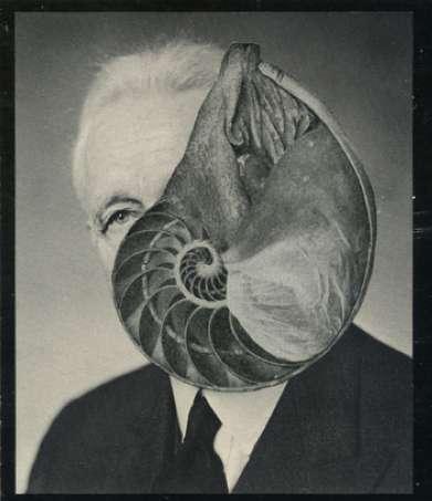 Snailish Snapshots
