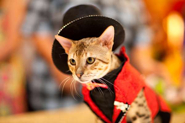 Algonquin Hotel Cat Fashion Show