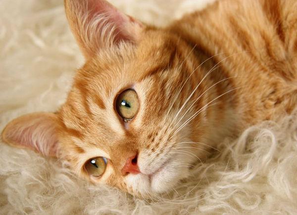 Allergy-Friendly Felines