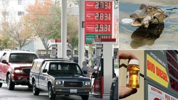 Car-Fueling Reptiles