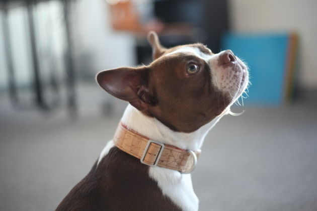Powerfully Designed Dog Collars