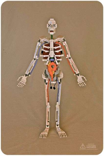 anatomical LEGO models