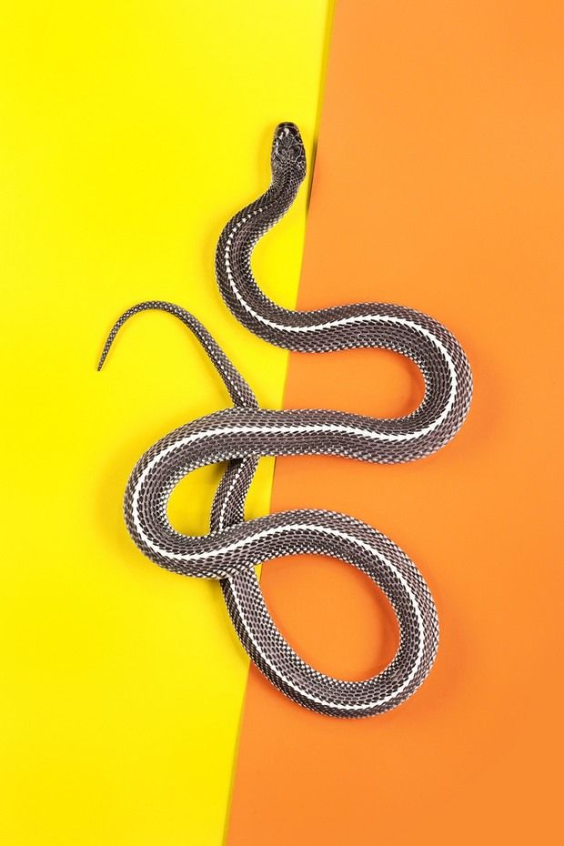 Striking Snake Portrayals