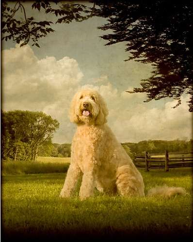 Antique Pet Portraits