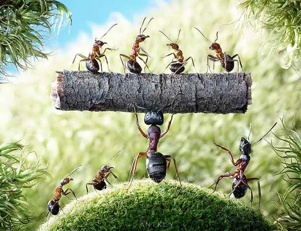 Action-Packed Ant Photography