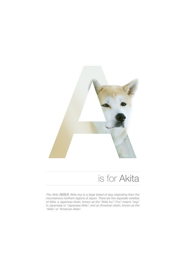Typographic Dog Posters