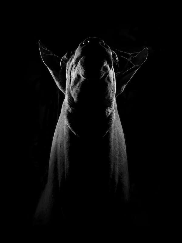 Haunting Animal Portraits