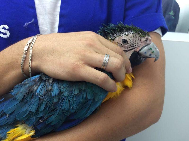 3D-Printed Bird Beaks