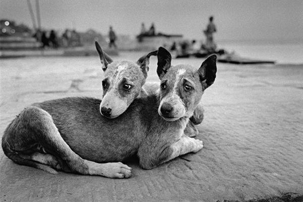 Endearing Animal Photography