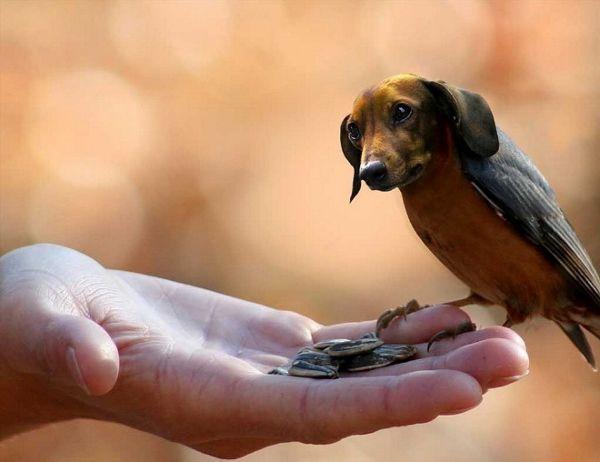 Avian Canine Creatures