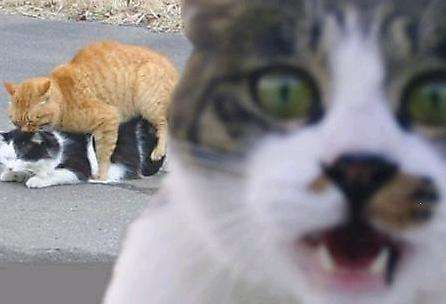 Animal Photobombing
