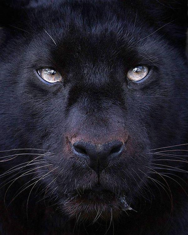 Soulful Animal Photography