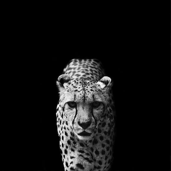 Wild Animal Portraits